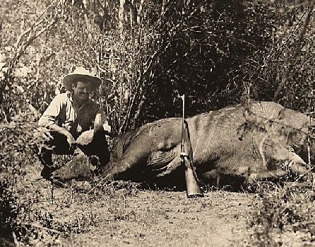 """The boy who grew up hunting rabbits and deer grew into the man paid to hunt rhino and brag about it which led to the famous cartoon of the author as Tarzan. Full-length caricature of Hemingway dressed in a loin cloth, applying """"herpicide"""" to his chest. He is seated on a mound of dirt, surrounded by a fish, animal antlers, a sword, a bull's head, and a boxing glove. The drawing may have been intended for the Vanity Fair series, """"Private Lives of the Great,"""" and was possibly referring to a 1933 dispute between Hemingway and writer Max Eastman. Evidently, Eastman, in reviewing Hemingway's book questioned the author's sense of his own masculinity. He thought that Hemingway's """"macho"""" themes """"suffer at times from that small inward doubt"""" and """"led to a literary style ... of wearing false hair on the chest."""""""