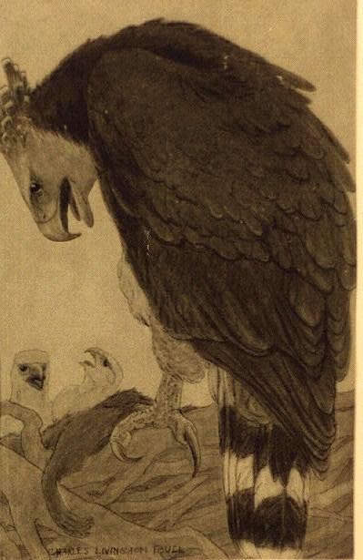 eagles001