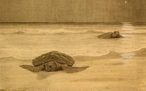 turtle002