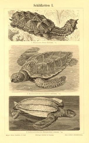 turtle003