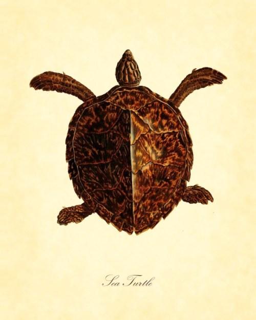turtle005