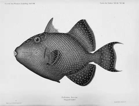 fishfri003