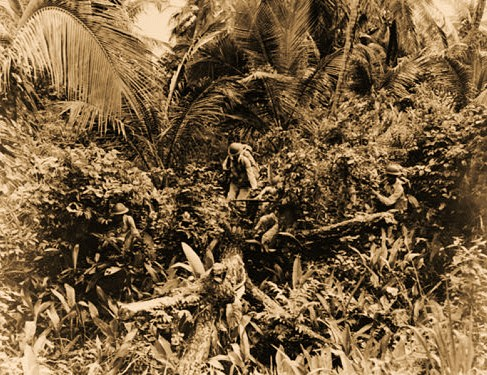 Men on jungle patrol in the Caribbean area take fullest advantage of natural foliage for camouflage purposes. It takes a quick eye to see these men stealing through the jungles