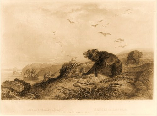 1839 print shows men in a rowboat coming ashore on the left on a desolate coastline to shoot ravaging bears, seen in center at a carcass and on the right fleeing from the approaching hunters.